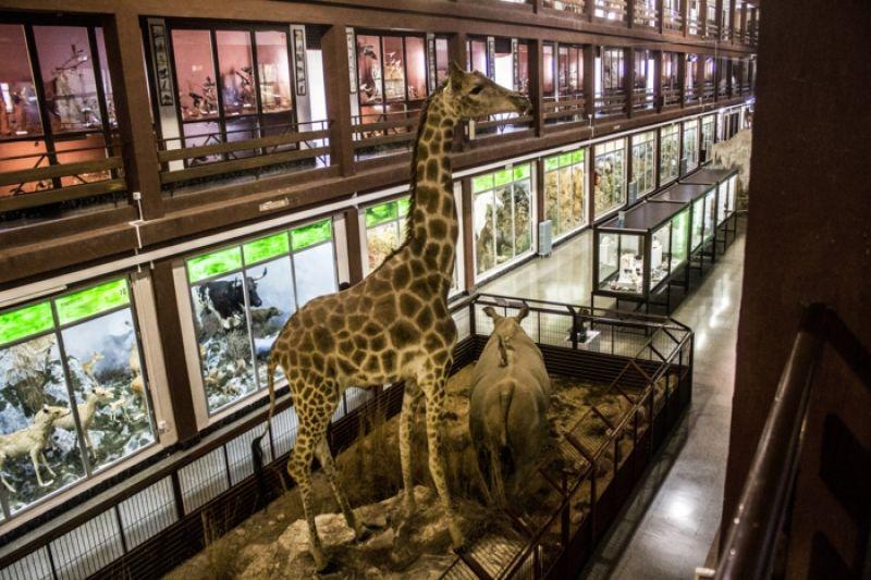 Museo de Ciencias Naturales del Carmen